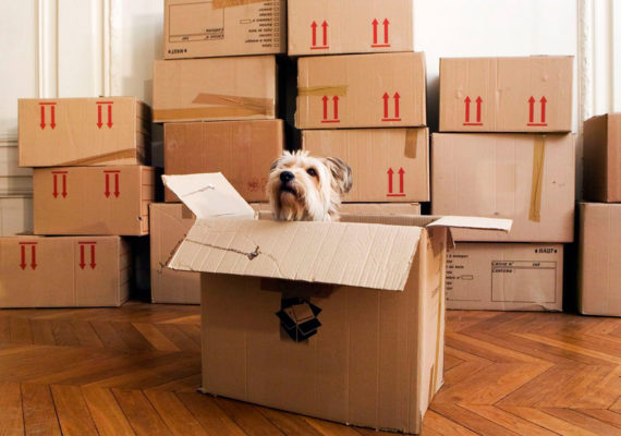 How To Move Your Pet